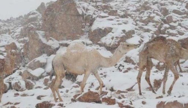 Fenomen rar: ninge în deșert! VEZI IMAGINI! - 4-1578907984.jpg