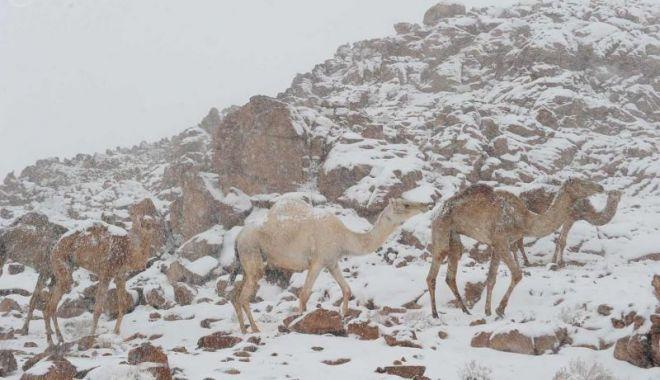 Fenomen rar: ninge în deșert! VEZI IMAGINI! - 5-1578907995.jpg