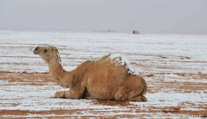 Fenomen rar: ninge în deșert! VEZI IMAGINI! - 6-1578908005.jpg