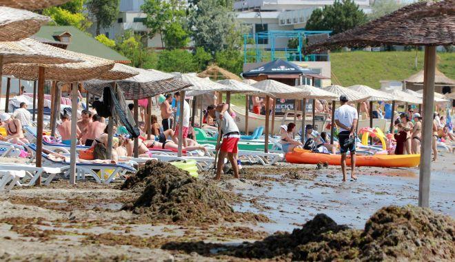 Foto: Algele din Marea Neagră ar putea fi folosite pentru producerea de fertilizatori pentru agricultură