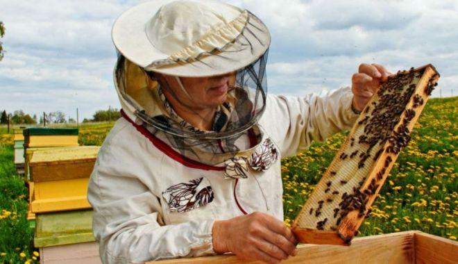Apicultorii vor încasa bani pentru pierderile din primăvară - apicultoriiprimesc-1631641750.jpg