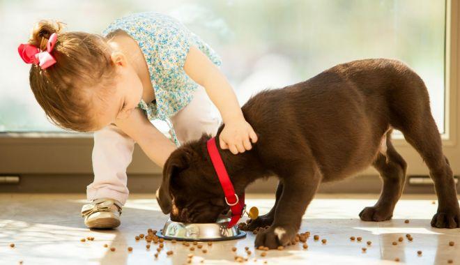 DailyNK - Un nou coronavirus se poate răspândi de la câini la oameni - caine-1622280527.jpg