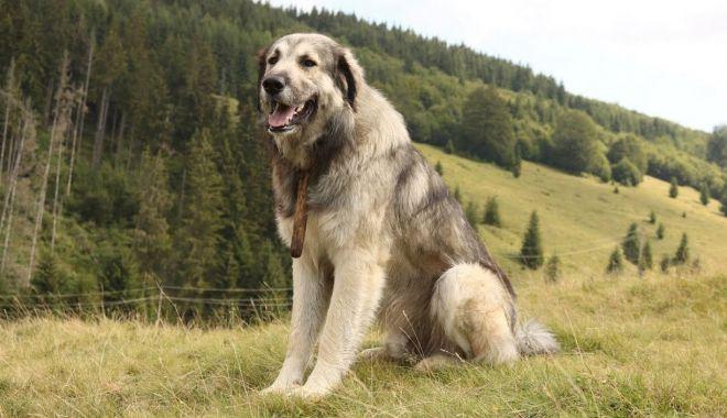 Câinele se întoarce mereu - caineleseintoarecemereu-1623327521.jpg