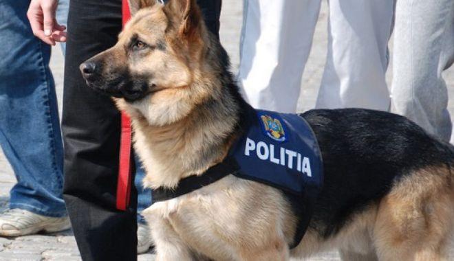 Mii de pachete de țigări, ascunse pe o navă, găsite de un câine polițist - cainepolitist1280x720-1617623655.jpg