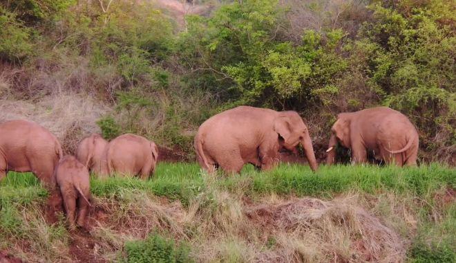 Călătoria celor 15 elefanţi urmărită pe tot globul are în spate o poveste tristă - calatoria4-1623320380.jpg