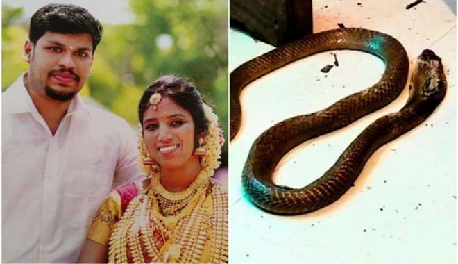 Un bărbat din India și-a ucis soția bogată cu o cobră, după ce nu a reușit să o omoare cu o viperă - cobra-1634137272.jpg