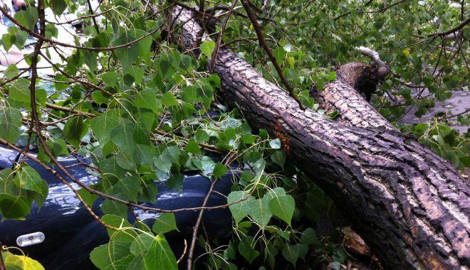 Bărbat ucis de un copac care a căzut peste el - copaccazut1-1632233585.jpg