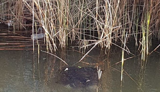 Bărbat găsit MORT, în canal, la Medgidia - crop-1619379054.jpg