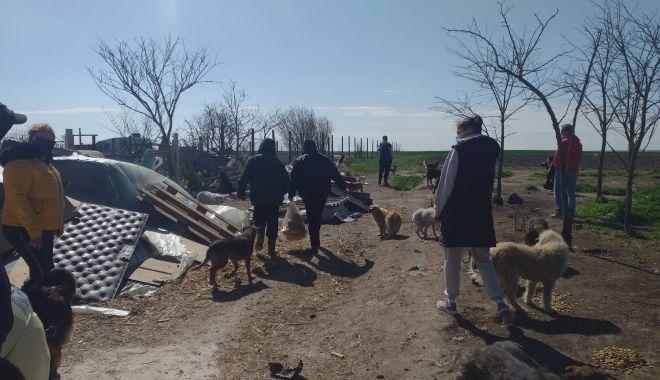 GALERIE FOTO / VIDEO. Descindere la un adăpost de câini din judeţul Constanţa. Animale, găsite în stare gravă - descindere-1618476846.jpg