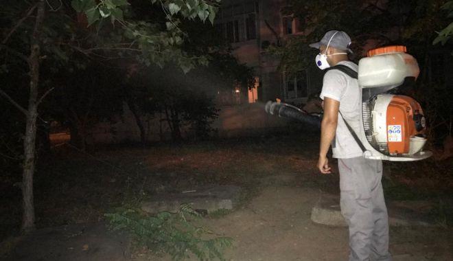 Foto: Dezinsecție în spațiile verzi din Constanța