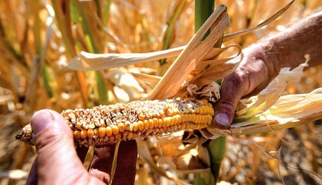 Foto: Fermierii, îngrijorați că nu știu când vor primi despăgubirile de secetă