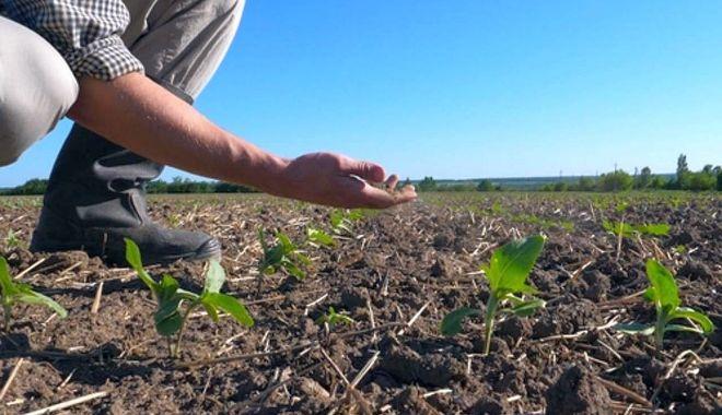 Foto: Fermierii cer urgentarea procedurii de evaluare a pagubelor din agricultură