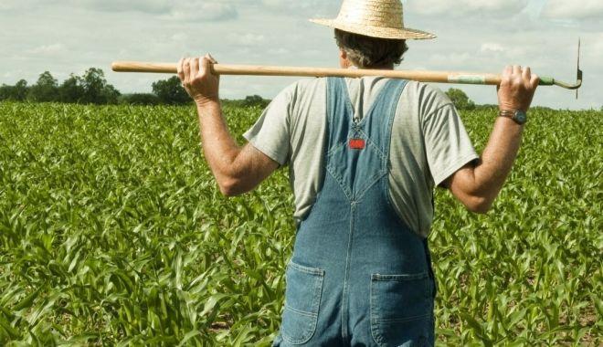 Foto: Fermierii sunt disperați! Despăgubirile și ajutoarele promise de guvernanți întârzie prea mult