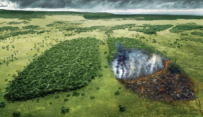 """Pădurea amazoniană nu mai este """"plămânul"""" Terrei: emite mai mult dioxid de carbon decât consumă - fond-1626375439.jpg"""