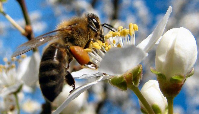 Temperaturile scăzute şi chimicalele, pericole pentru viaţa albinelor. Ce prevede Legea Apiculturii - fond1-1617814113.jpg