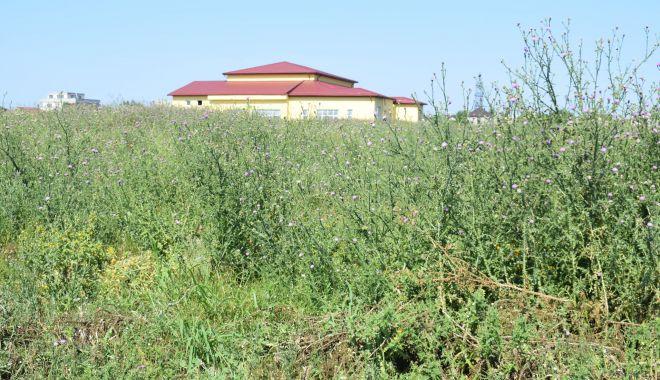Locuitorii din Cumpăna, somaţi să tundă iarba din apropierea gospodăriilor - fondcumpanacuratenie2-1626375900.jpg