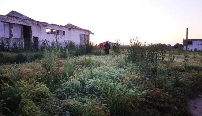 """Detalii cutremurătoare din cazul fetiței de 3 ani, găsită sfâșiată pe câmp, la Saraiu. """"A fost ucisă de maidanezi!"""" - fondfetitamaidanezi1-1626880634.jpg"""