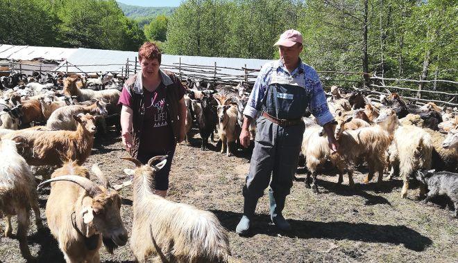 Încotro se îndreaptă agricultura românească? Răspunsul îl va da recensământul general agricol din 2021 - fondincotroseindreaptaagricultur-1602869136.jpg