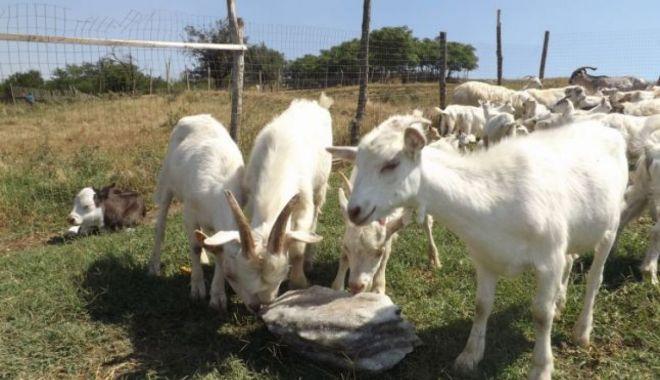 Încotro se îndreaptă agricultura românească? Răspunsul îl va da recensământul general agricol din 2021 - fondincotroseindreaptaagricultur-1602869146.jpg