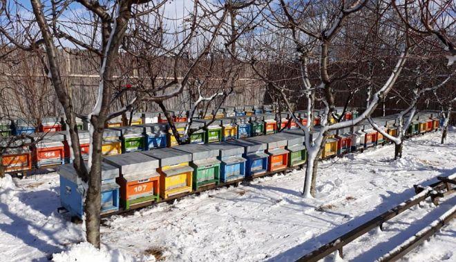 An slab pentru apicultori. Mierea a fost mai puţină, dar de calitate - fondstupiiarna-1610651905.jpg