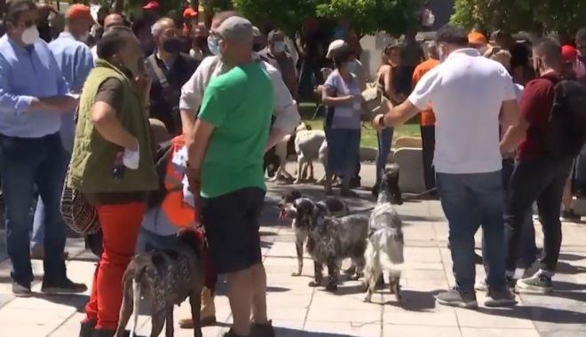 Grecii au protestat împotriva sterilizării animalelor de companie - greciiauprotestat-1621885330.jpg