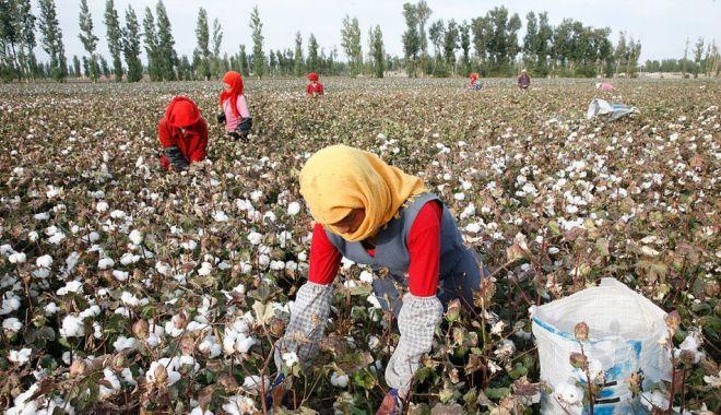 Importurile din provincia chineză Xinjiang, interzise în SUA - importurile-1626375537.jpg
