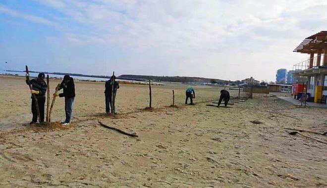 A început montarea gardurilor de stuf pe plajele de pe litoral - inceputmontarea-1605873818.jpg
