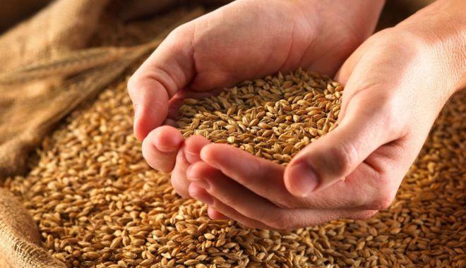 Iordania a cumpărat 60.000 de tone de grâu din România - iordaniaacumparat-1610616265.jpg