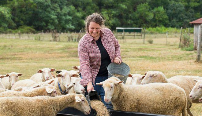 De ce nu mai sunt profitabile fermele de animale. Tot mai mulţi proprietari vor să le vândă - jos-1623347808.jpg