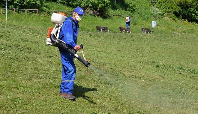 Administraţia locală din Medgidia a început acţiunea de dezinsecţie şi deratizare - medgidiaderatizare-1625076647.jpg