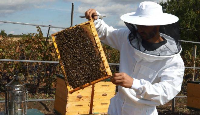 Producţia de miere a crescut în cantităţi mari - miere-1626888049.jpg