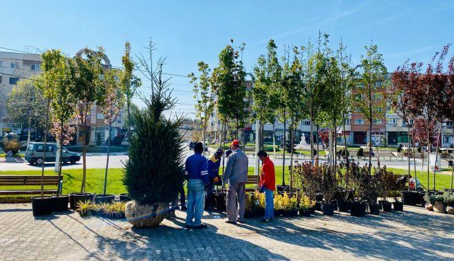 Primăria Năvodari plantează arbori în oraş. Asociaţiile de locatari, obligate să îi îngrijească - navodariverde-1632763810.jpg