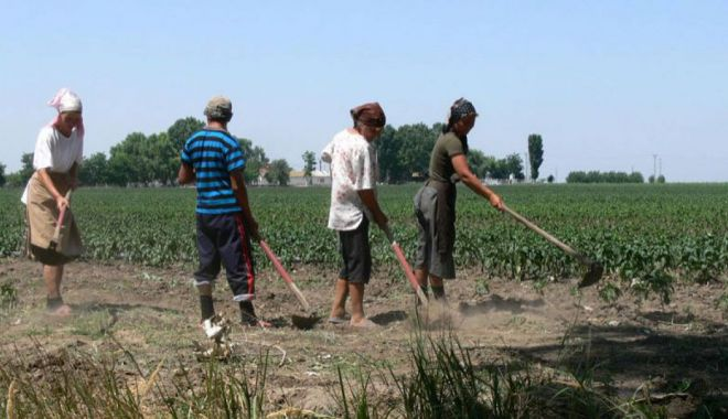 Pensiile din agricultură sunt foarte mici - pensiiledinagricultura-1614972637.jpg