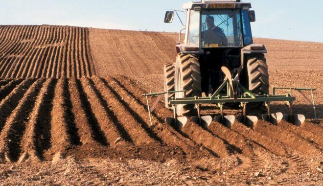 Foto: Piața terenurilor agricole din județul Constanța mustește de oferte de vânzare