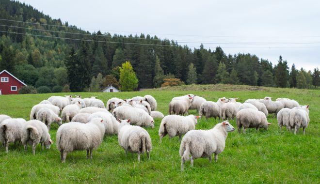 Popa şi ciobanul - popa-1610630011.jpg