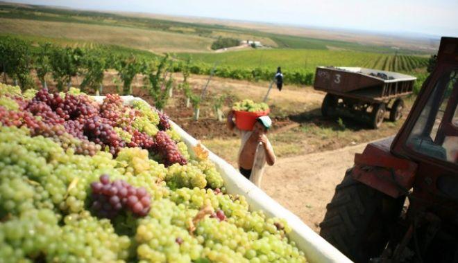 Producţia de vin a României a scăzut - productiedevininscaderesursa-1603818794.jpg