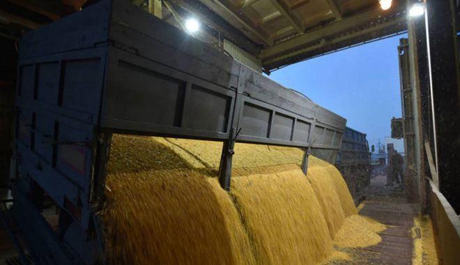 România a încasat peste 507 milioane de euro din exportul de grâu - romaniaexportgrausursapublicnews-1602419855.jpg