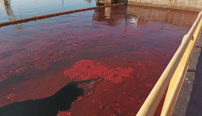 Sancțiuni pentru poluarea acvatoriului portuar din Mangalia - sanctiunipentru-1623350325.jpg