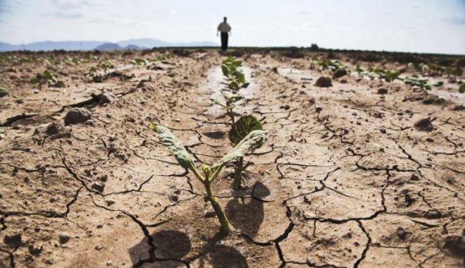 Foto: Culturile agricole din județul Constanța sunt cele mai afectate de secetă