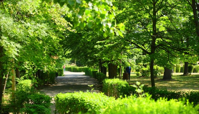 Şerpi la Constanţa. Primăria, depăşită de bălăriile din spaţiile verzi - serpilaconstanta-1623350418.jpg