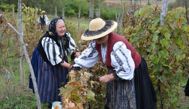 Tradiţii populare legate de culesul viei şi obţinerea vinului - traditii1-1634145441.jpg