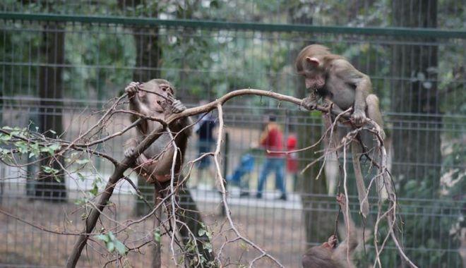 """Proiectul de lege prin care se permitea sacrificarea animalelor """"în surplus"""" de la zoo a fost retras - zootargumures-1615033196.jpg"""