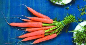 Fibrele morcovului dezinfectează tractul intestinal