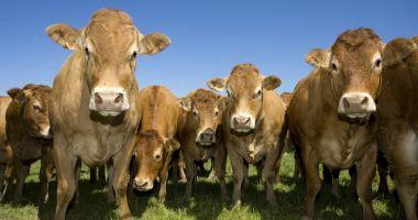 Peste 100.000 de fermieri au depus cereri pentru Măsura 21