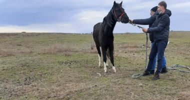 Explicația halucinantă a proprietarului cailor găsiți înghețați și flămânzi, la Techirghiol