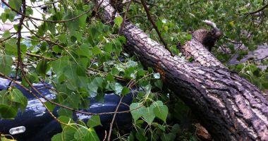 Bărbat ucis de un copac care a căzut peste el