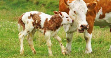 Fermierii vor primi bani pe animale reale în 2021