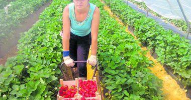 Joburi în străinătate. Se caută muncitori necalificați în agricultură