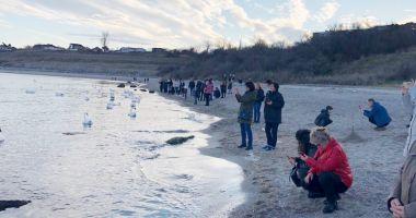 Gripă aviară la Eforie. Două lebede găsite moarte, pe plajă