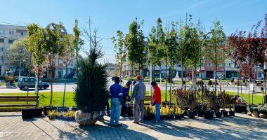 Primăria Năvodari plantează arbori în oraş. Asociaţiile de locatari, obligate să îi îngrijească